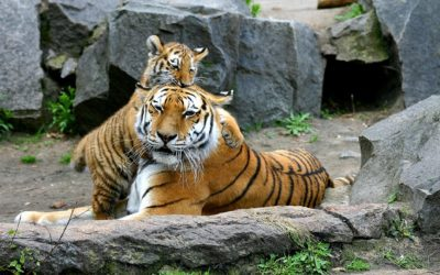 So wollen wir den Duisburger Zoo zukunftsfähig machen