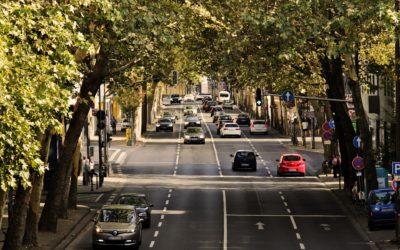 SPD-Fraktion für nachhaltigen Umgang mit Straßenbäumen